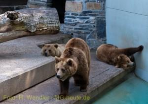 3 Bären